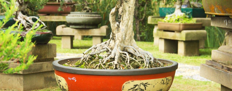 Viveros castro especialistas en plant n de olivo en c rdoba for Viveros en cordoba